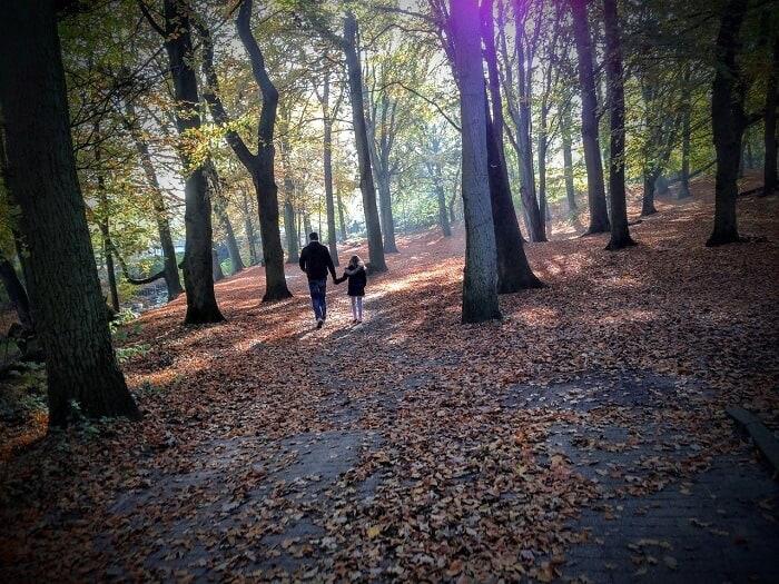 טיול להולנד עם ילדים - יער בסתיו
