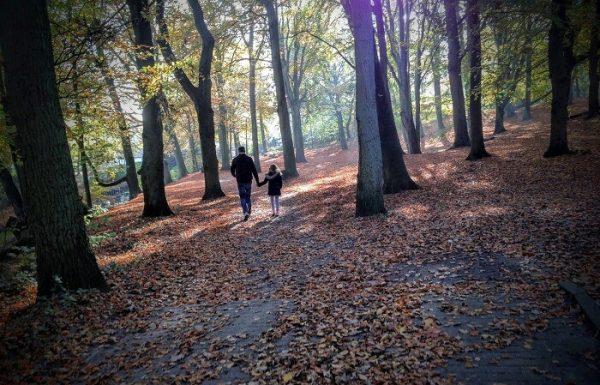 טיול לאמסטרדם – 5 אטרקציות שאסור לפספס!